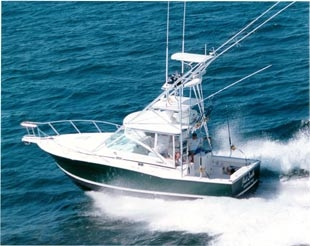 Fishability Cabo 31 Express By Spider Anderson - Salt Water
